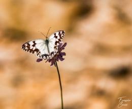 Photo macro papillon