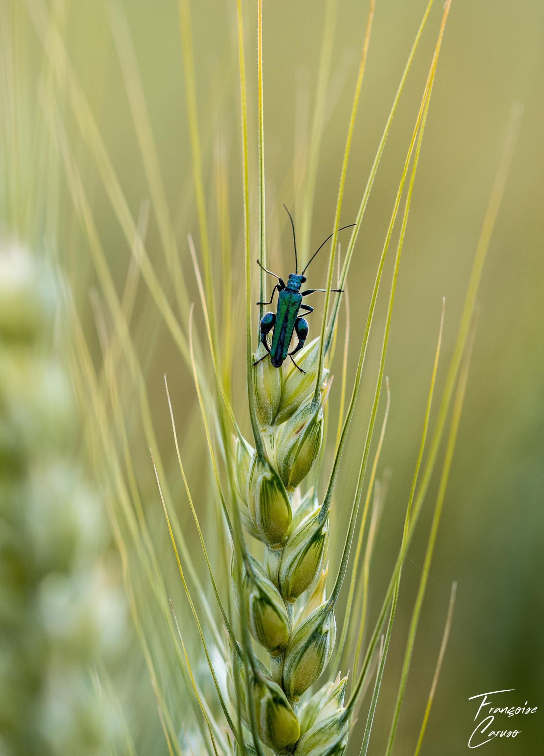 Photo macro insecte