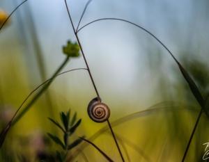 Photo Macro Escargot