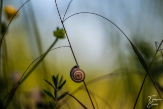 Photo Macro escargot