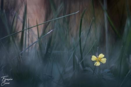 Macro Fleur photographie