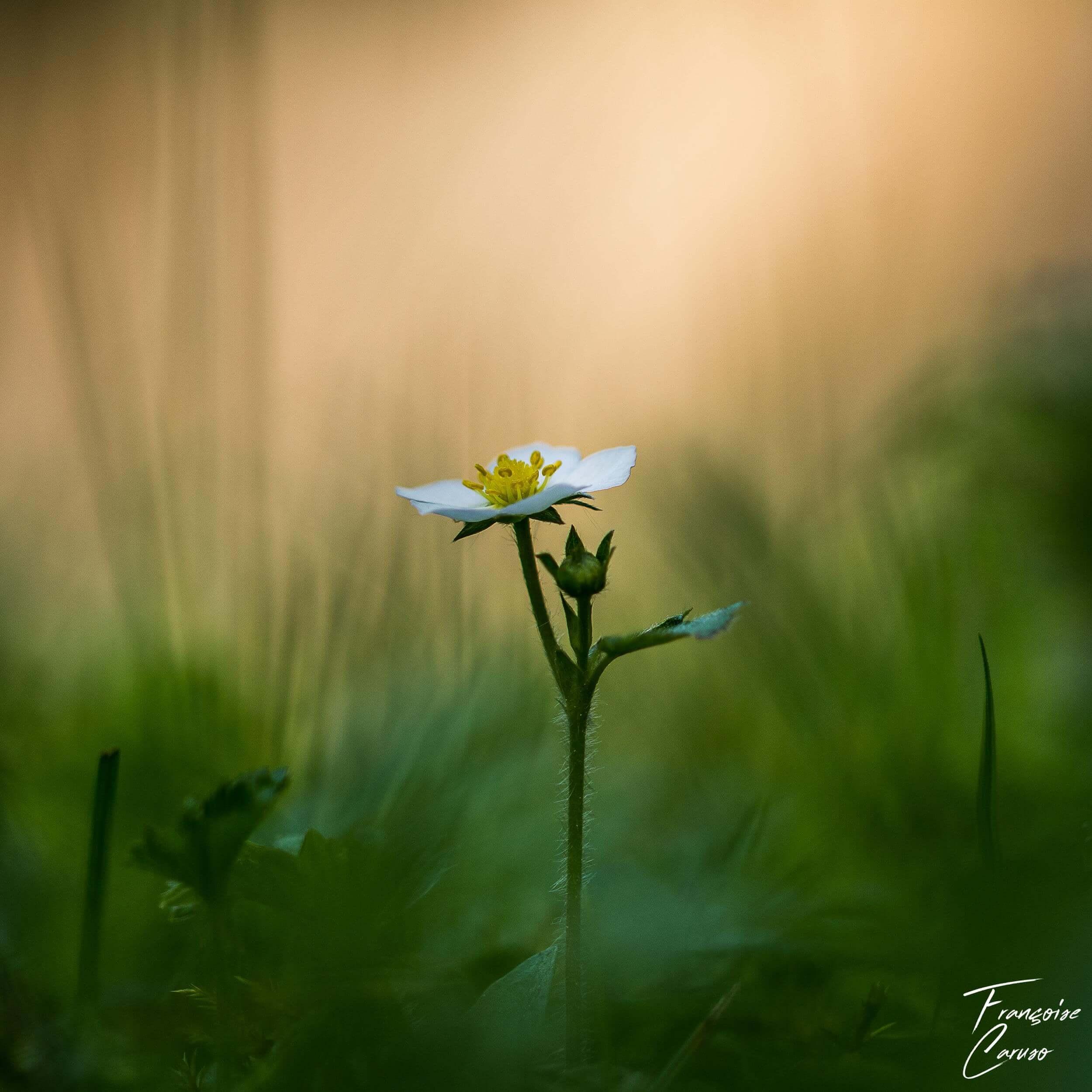 Photo de fleur/Macrophotographie