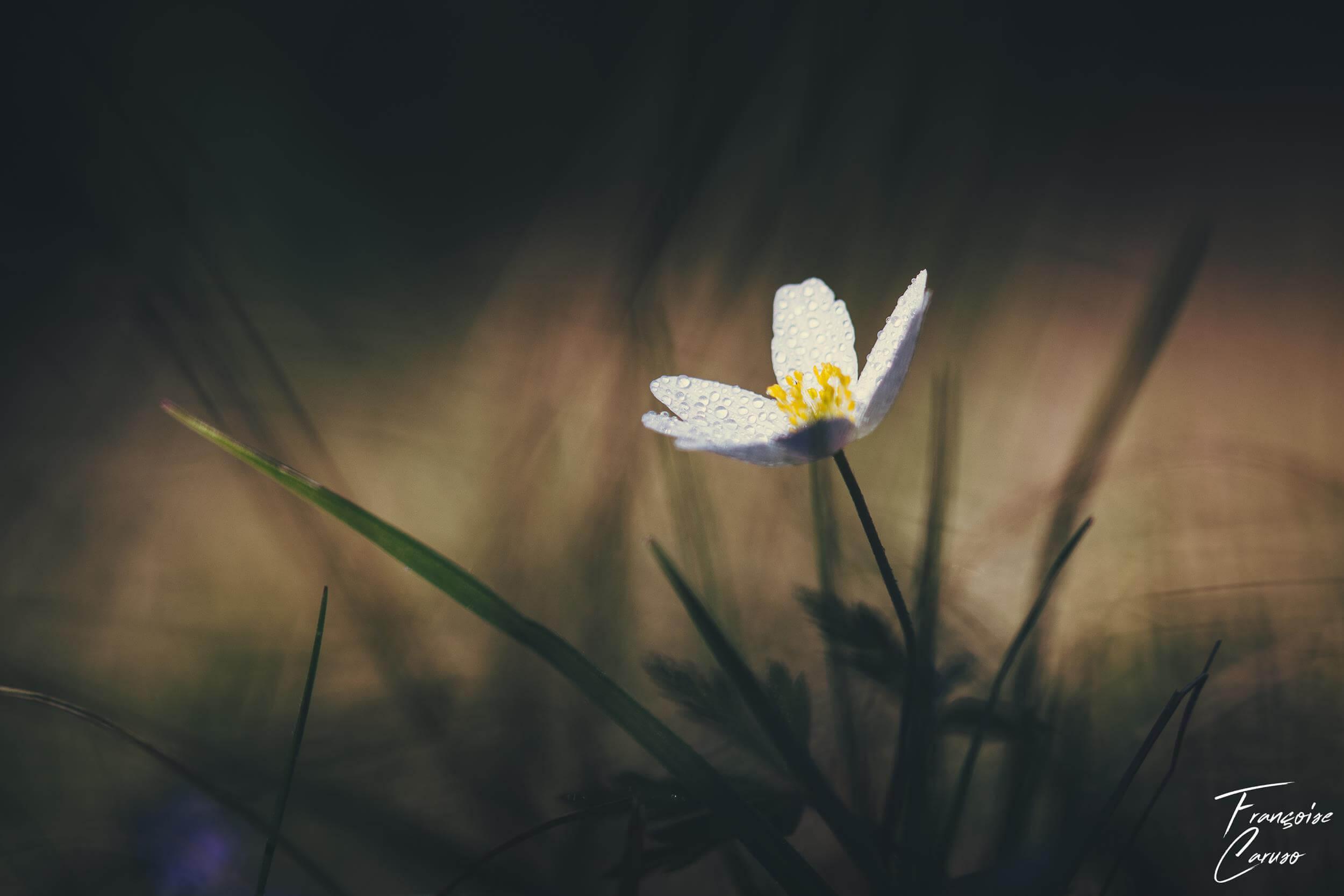 Phot fleur macro