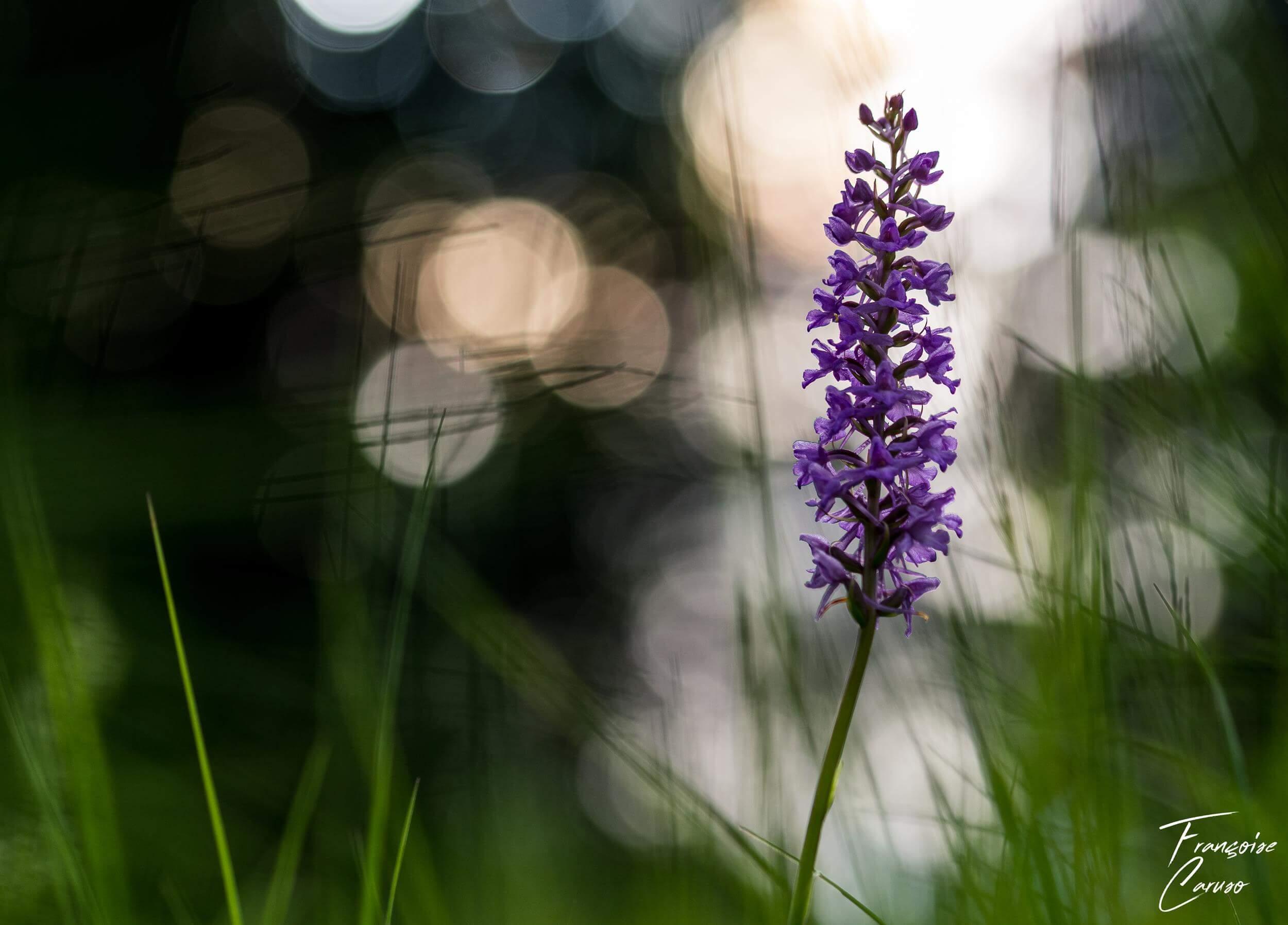 Photo macro Orchidée