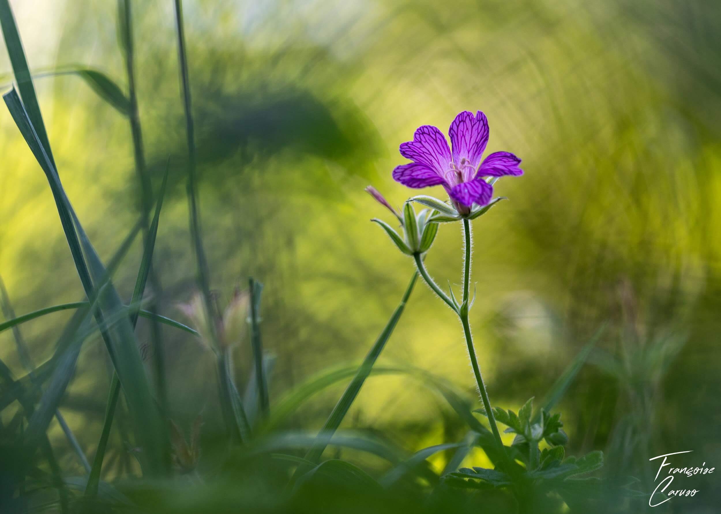 Photo de fleur - macrophotographie