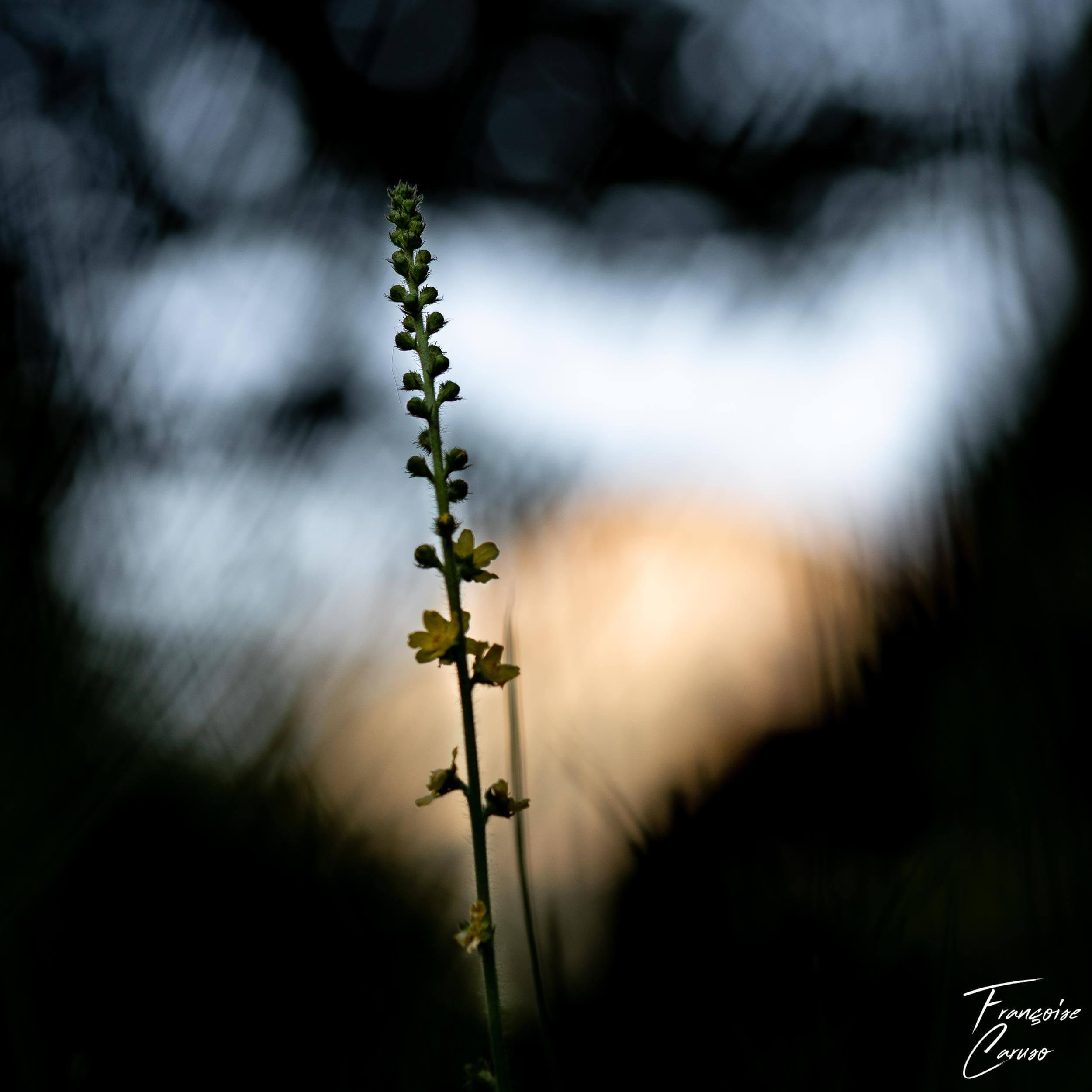 Macrophotographie de fleur