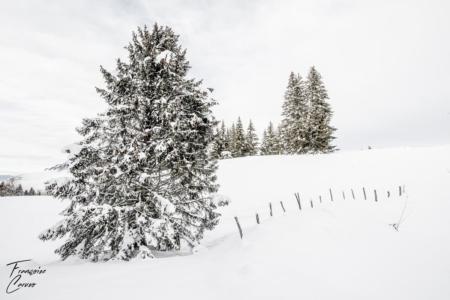 Photo de neige - Plateau d'Agy