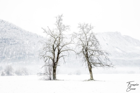 Photo de paysage de neige